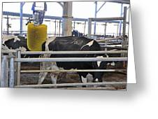 Cow Brush Greeting Card by Photostock-israel