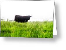 Cow Country Greeting Card