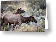 Cow Elk Greeting Card