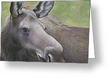 Cow Moose Greeting Card
