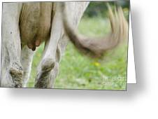 Cow Nips And Tail Greeting Card