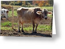 Cow Shadows Greeting Card
