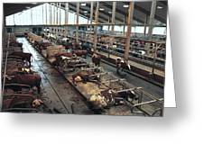 Cow Shed Greeting Card by Bjorn Svensson