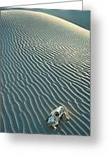 Cow Skull In Dunes Greeting Card by Garry Gay