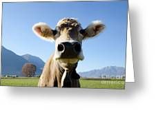 Cow With A Bell Greeting Card