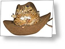 Cowboy Hat With Feathers Greeting Card