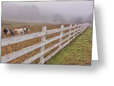 Cows And Fog Greeting Card