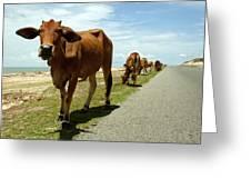 Cows At The Sea Greeting Card