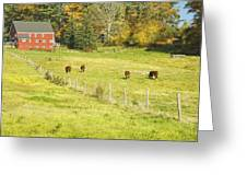 Cows Grazing On Grass In Farm Field Fall Maine Greeting Card
