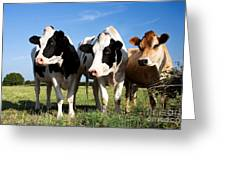 Cows Greeting Card by Jane Rix