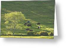 Cows On Hillside Summer In Maine Greeting Card
