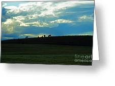 Cows On The Hill Greeting Card