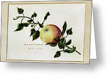 Coxs Apple 1922 Greeting Card