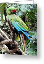 Coy Parrot Greeting Card