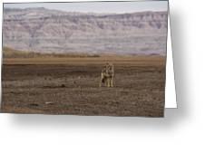 Coyote Badlands National Park Greeting Card