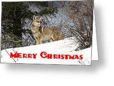 Coyote Christmas Greeting Card