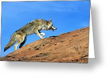 Coyote Climbs Mountain Greeting Card