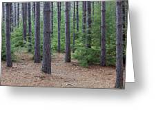 Cozy Conifer Forest Greeting Card