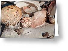 Crab Shell Greeting Card