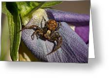 Crab Spider In A Violet Greeting Card