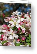 Crabapple Tree Flower Greeting Card