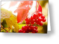 Cranberry Bliss Greeting Card