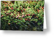 Cranberry Bog Greeting Card