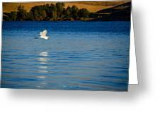 Crane In Flight Greeting Card