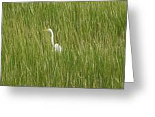 Crane In The Tall Grass On Assateague Island Maryland Greeting Card
