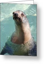 Cranky Seal  Greeting Card