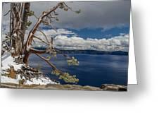 Crater Lake Pine Greeting Card