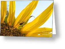 Crawling Along The Sunflower Greeting Card