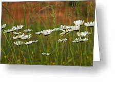 Crazy Lazy Oxeye Daisies Greeting Card