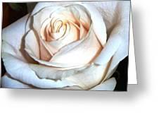 Creamy Rose IIi Greeting Card