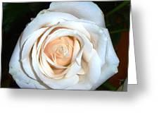 Creamy Rose Iv Greeting Card