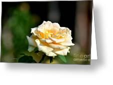 Creamy Sunlight Greeting Card