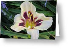 Creamy White Lily Greeting Card