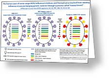 Creation Of H3n2 Influenza Virus Greeting Card