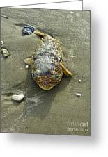 Creatures Of The Gulf - Still Blue Eyes Greeting Card