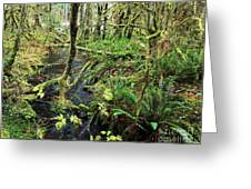 Creek In The Rain Forest Greeting Card