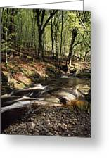 Creek In Woods, Cloughleagh, County Greeting Card