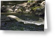 Creek Greeting Card