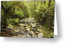 Creek Running Through The Rainforest Greeting Card