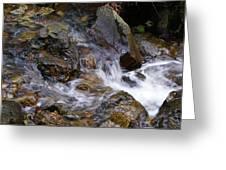 Creek Scene On Mt Tamalpais Greeting Card