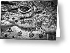 Creepy Crawler Greeting Card