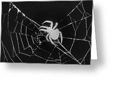 Creepy Spider Greeting Card