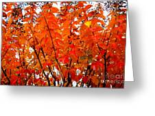 Crepe Myrtle Leaves In Autumn Greeting Card