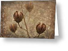 Crepe Myrtle Seed Pods With Grunge And Textures Greeting Card