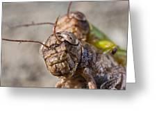 Crickets Mating Greeting Card