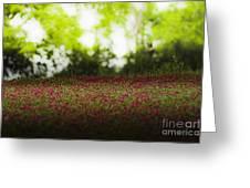 Crimson Clover Greeting Card